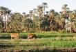 صور صور عن الريف المصري