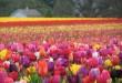 صور تعبير عن فصل الربيع قصير الجمال