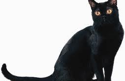 صور تفسير رؤية القطط في المنام