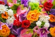 بالصور اجمل الزهور والورود الملونه beautiful flowers 110x75