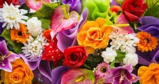 صورة اجمل الزهور والورود الملونه