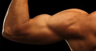 بالصور طرق تكبير عضلة الباي by 310x165