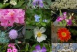 بالصور اسماء الورد ومعانيها فى اللغة العربية fleurs jardin 110x75