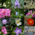 fleurs_jardin