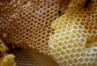 بالصور فائدة شمع العسل honey comb 110x75