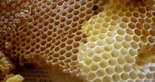 صوره فوائد شمع العسل للشعر