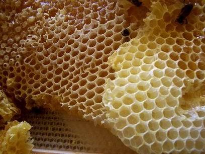 بالصور فوائد شمع العسل للشعر honey comb