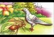 صور قصة الحمامة والنملة والصياد