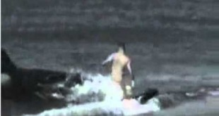 صوره سمك قرش يلتهم فتاة في شاطئ جده