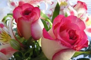 صوره اجمل صور خلفيات لزهور الورد