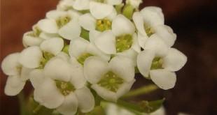 بالصور صورة زهور وورود بريه img girls ly1369612227 664 310x165