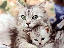 صوره تفسير الاحلام القطط في المنام
