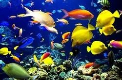 بالصور موضوع عن الاسماك عالم البحار والمحيطات medium 1238209012 250x165