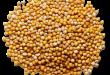بالصور فوائد بذور الخردل المذهله للصحه mustard seeds 110x75