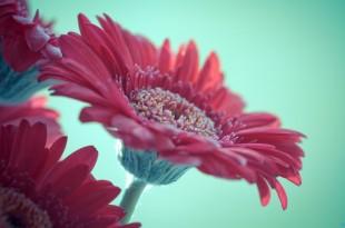 صوره اجمل زهور طبيعية جميلة