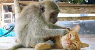 صوره اجمل الصور المضحكة عن الحيوانات
