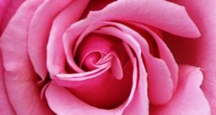 صور بحث عن اللون الزهري