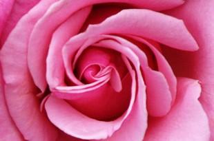 صوره بحث عن اللون الزهري