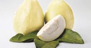صور تفسير حلم الجوافة لابن سيرين