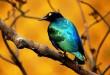 بالصور صور اجمل طيور بالعالم صور أجمل الطيور الملونة 1 110x75