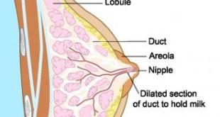 صورة علامات الانوثة في جسم المراة