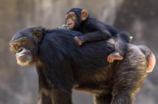صوره ما هي اذكى الحيوانات فى العالم