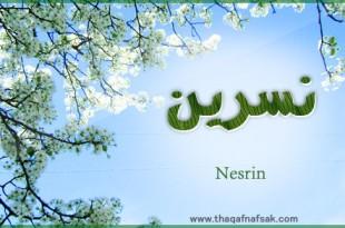 صوره ما معنى اسم نسرين فى المعجم