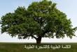 بالصور الكلمة الطيبة كالشجرة الطيبة 015 110x75