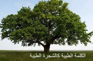 صوره الكلمة الطيبة كالشجرة الطيبة