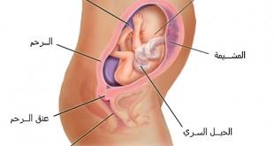 بالصور حجم الجنين في الشهر السادس 060411090648d0cd4xezmi53 310x165