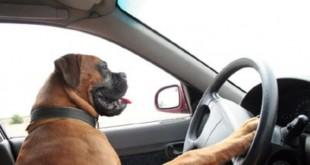 صوره اخبار الكلاب و مرضها بالانفلونزا