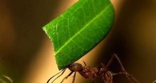 صوره النمل في القران الكريم اكتشف العلماء حديثا ان جسم النملة مزود بهيكل عظمي خارجي صلب
