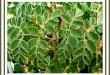 بالصور فوائد اعشاب المورينجا للتخسيس 13401315961 110x75