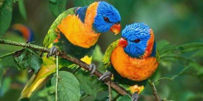 صورة خلفيات وصور اجمل العصافير , بجودة عالية عصافير الحب 13434194036 660x330