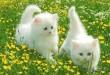 صور اروع القطط في العالم