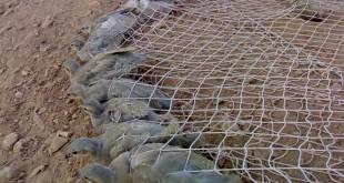 صوره معلومات عن صيد الحجل