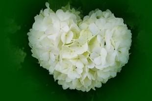 صوره قلوب بيضاء فۓ زمن القلوب الملونۂ