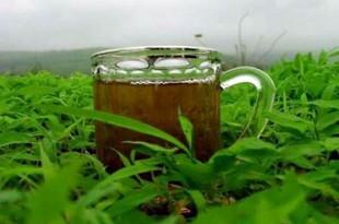 صوره ورق الشاي الاخضر للحمل فوائد