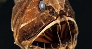 صوره صور اسماك مخيفة مرعبة