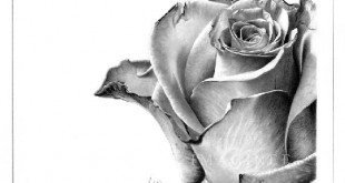 بالصور صور جميلة رسم ورود 64728539e9a217d1b1020ce92a2df025 310x165