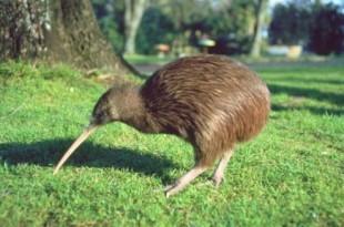 صوره بعض انواع من الحيوانات النادرة