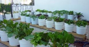 صوره كيفية زراعة الدبشة في حديقة المنزل