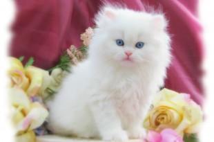 صوره صورة قطط جميلة جدا