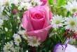 بالصور اجمل صور زهور وورود طبيعيه روعه 914 110x75