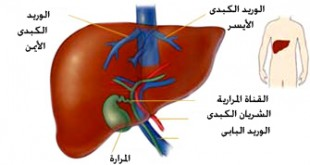 صوره تفسير حلم الكبد في المنام