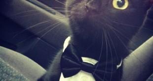 صوره تفسير حلم القطة السوداء