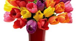 صور ورد ملون  وزهور متنوعة لكل الازواق