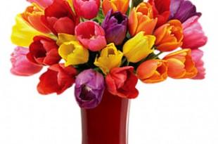 صوره ورد ملون  وزهور متنوعة لكل الازواق