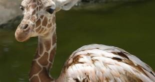 صوره صور حيوانات غريبة و عجيبة
