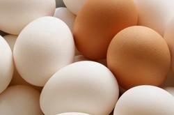 صور رؤية البيض في المنام